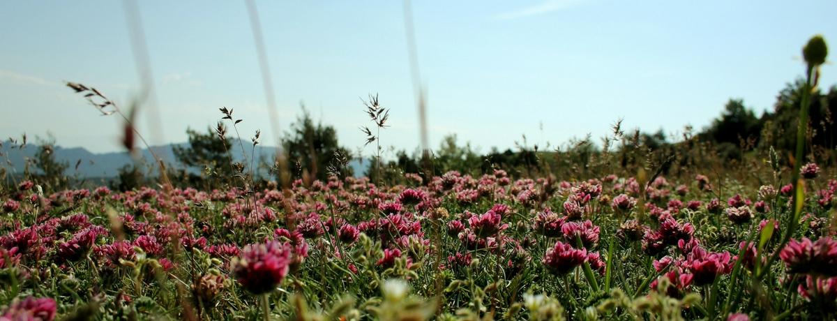 Primavera en el Prepirineo