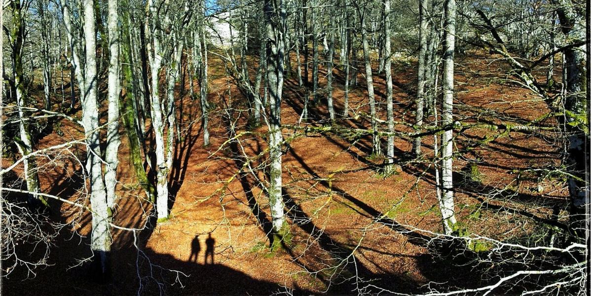 Hayedo en Puy Moné, Luesia. Prepirineo, senderismo, Prepyr365, trekking.